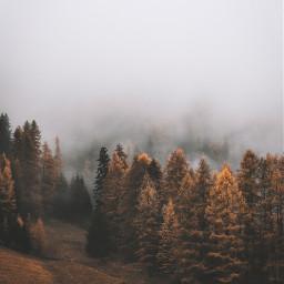nature autumn trees background backgrounds freetoedit