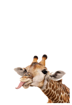 giraffe animal cute freetoedit