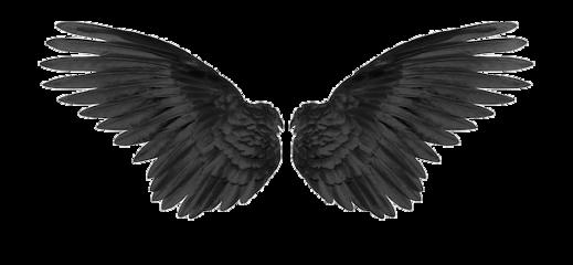 wings darkangel black blackwings freetoedit