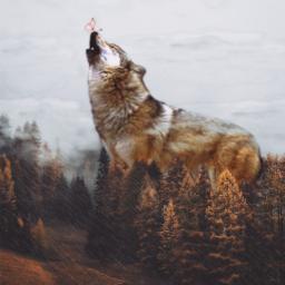freetoedit remix madewithpicsart wolf artist