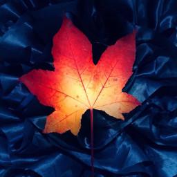 leaf autumn blue satin orange pcleaves