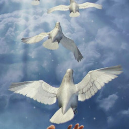 freetoedit editbyme peace birds photomanipulation