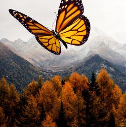 freetoedit butterflys