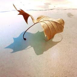 freetoedit pcleaves leaves nature fall