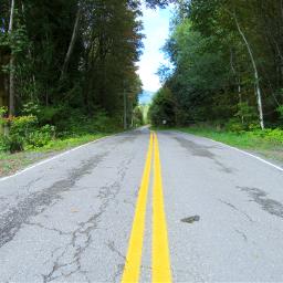 mypic road trees freetoedit