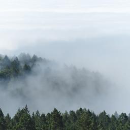 nature fog background backgrounds freetoedit