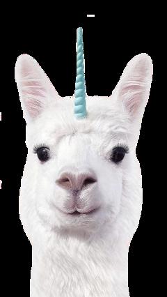 animal cute funny head freetoedit