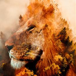 doubleexposure animal lion surrealism surreal