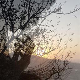 freetoedit doubleexposurecontest remixit tree sunset