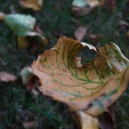 pcleaves leaves colorfulleaves