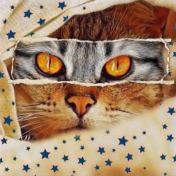 freetoedit cat eyes eyescat draw
