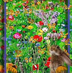 freetoedit rabbit field wildflowers butterflies