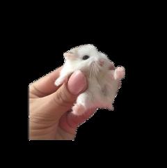 cute png pngs aesthetic animal freetoedit