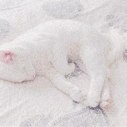 whitecat whiteaesthetic clean