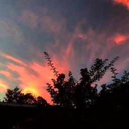 colourfulsky sky plants evening eveningsky freetoedit