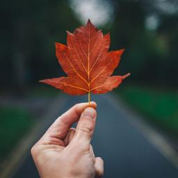leaf autumn fall hand freetoedit