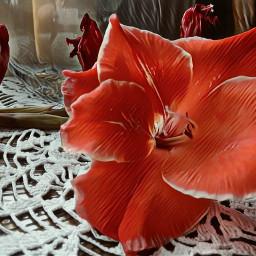 naturephotography flower red autumn september2019