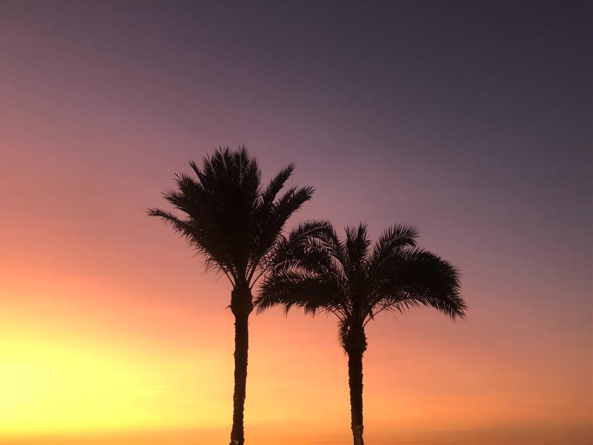 #freetoedit #nofilter #minimalism #photography #phonephotography #nature #naturephotography #sky #trees #palmtrees #sun #sunset #colors #silhouette #evening #popular #interesting #travel #egypt #background #noedit