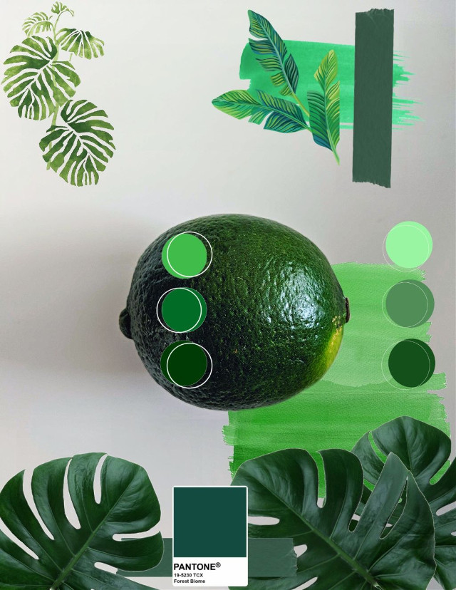 What's your favorite color ❓ @20abigailmurphy's is 💚💚 #green #pallette #pantone #collage #freetoedit