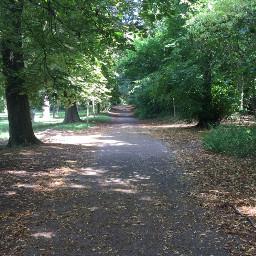 freetoedit park walkway trees