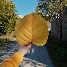 autumn 2019 picsart colorful photo freetoedit