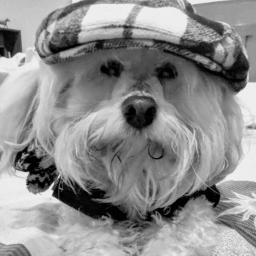 freetoedit sistersdog shaggy poddle mix pcblacknwhite