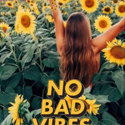 freetoedit background sunflower vsco aestetic