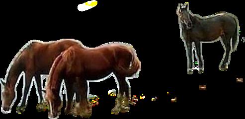 cavalos horses animais fazenda country freetoedit