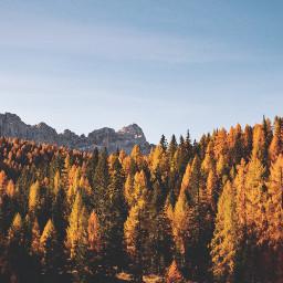 autumn fall nature background backgrounds freetoedit