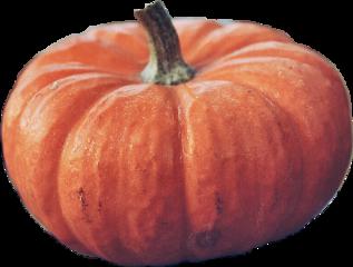 oktober lady-in-blue freetoedit october