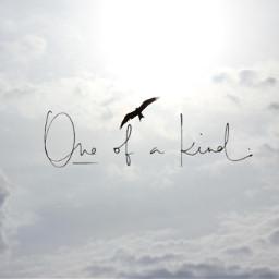 unsplash clouds seagull sun oneofakind freetoedit