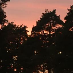 pcafterdark afterdark forest sunset perple pcbluehour bluehour