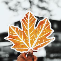 nature fall leavesborder october2019 freetoedit