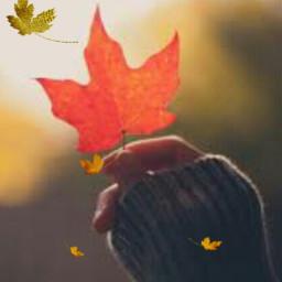 freetoedit challenge leaf srcautumncolors autumncolors