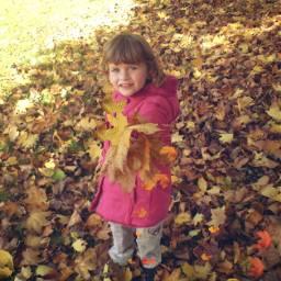 freetoedit picsart autumn leaves dailysticker srcautumncolors