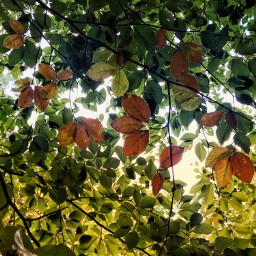 autumn autumniscoming helloautumn autumnleaves leaves