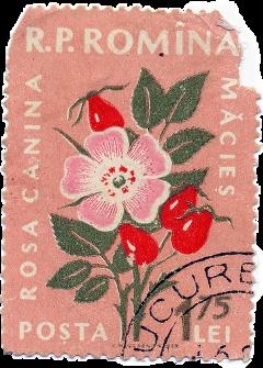 ephemera stamp postage mail mailart scrap scrapbook freetoedit