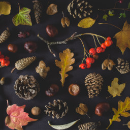 autumn fall leaves background backgrounds freetoedit