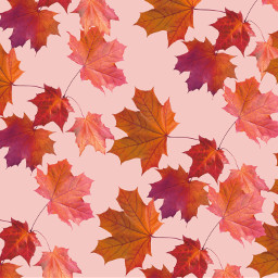fall leaves autumn background backgrounds freetoedit