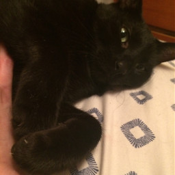 tummytime blackcat loveislove kindness affection