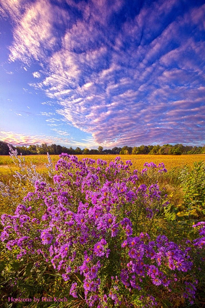 """"""" Adorned in Scarlet """" - Wisconsin Horizons by Phil Koch. #landscapephotography  #freetoedit #remixit #clouds #naturephotography #peace #beauty #beautiful #pretty #life #summer #countryliving #flowers #wildflowers #moody #earth #peaceful #sunrise #sunset #autumn #purple"""
