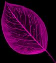 leaf autumn tree october purple freetoedit