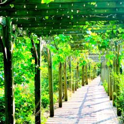 pathways pathway paths