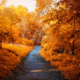 autumn fall nature background backgrounds freetoedit