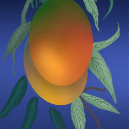 dcmyfavfruit favfruit mango drawing drawtools