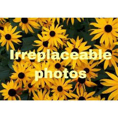 irreplaceable_photos