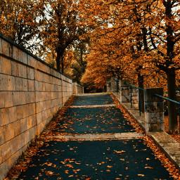 freetoedit photography leavesfalling autumn naturelovers