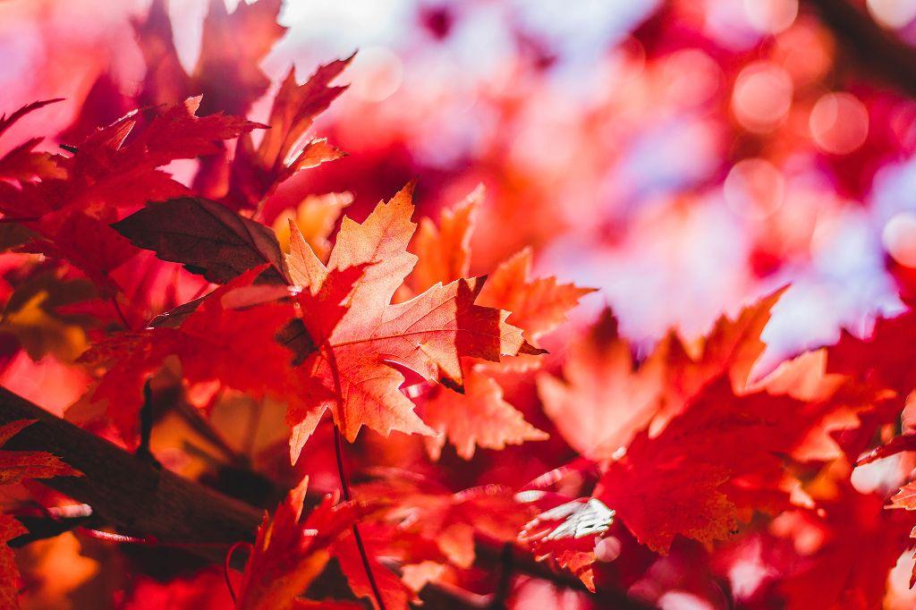 Edit this beautiful landscape. Unsplash (Public Domain) #autumn #fall #leaves #background #backgrounds #freetoedit