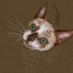 portait cat eyes digitalart colorpaint