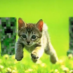 freetoedit minecraft cat creeper creepers